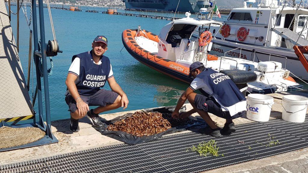 """foto-datteri-1024x576 Gaeta la Guardia Costiera dichiara guerra ai predoni del mare """"datterari"""""""